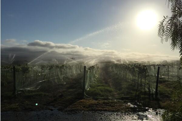 babcock-600-400-irrigation