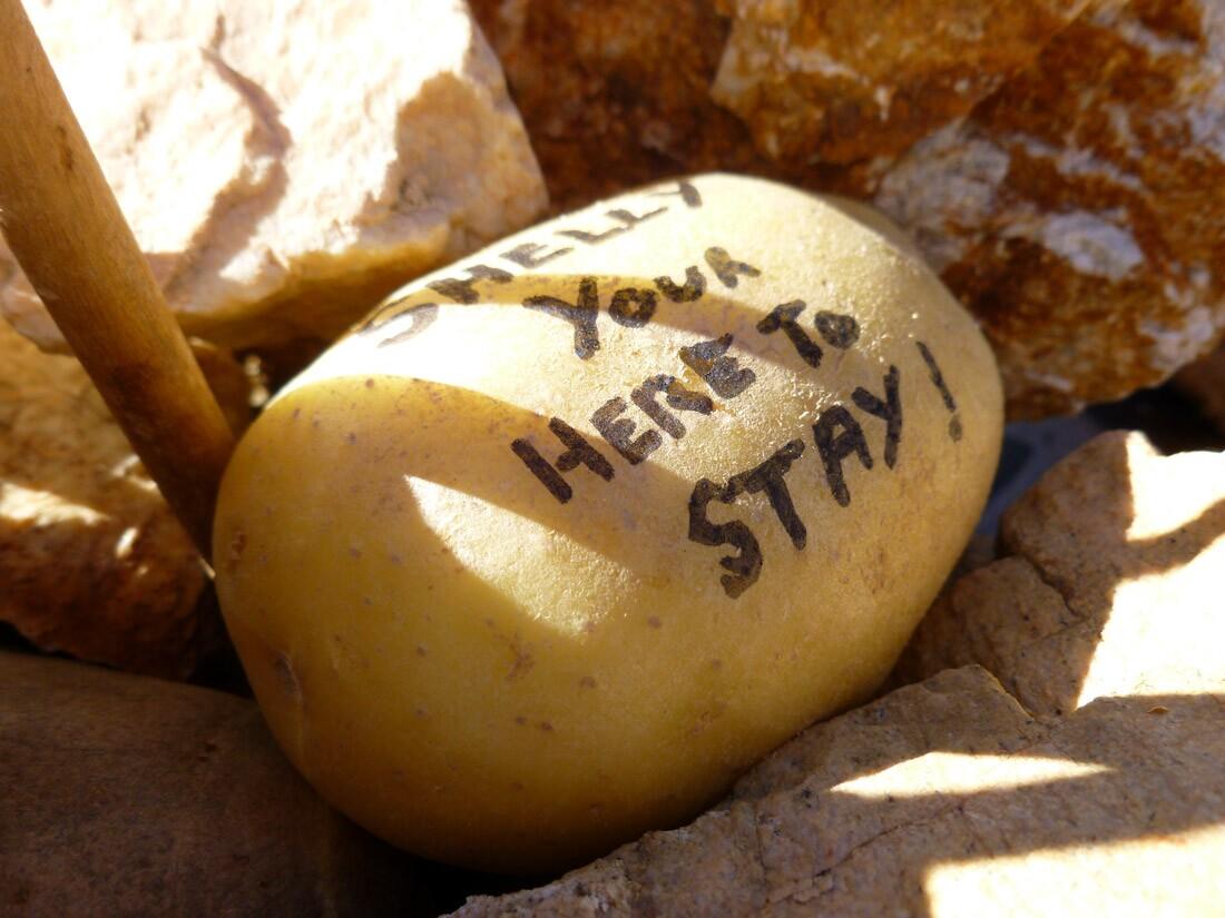 Potato Mountain / Herman Garner Biological Preserve