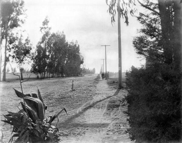 The Santa Monica Cycle Path at Washington and Western, circa 1900. Courtesy of the USC Libraries - California Historical Society.
