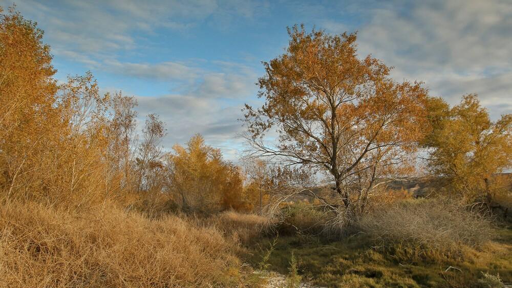 Trees at Afton Canyon | Photo: David Lamfrom