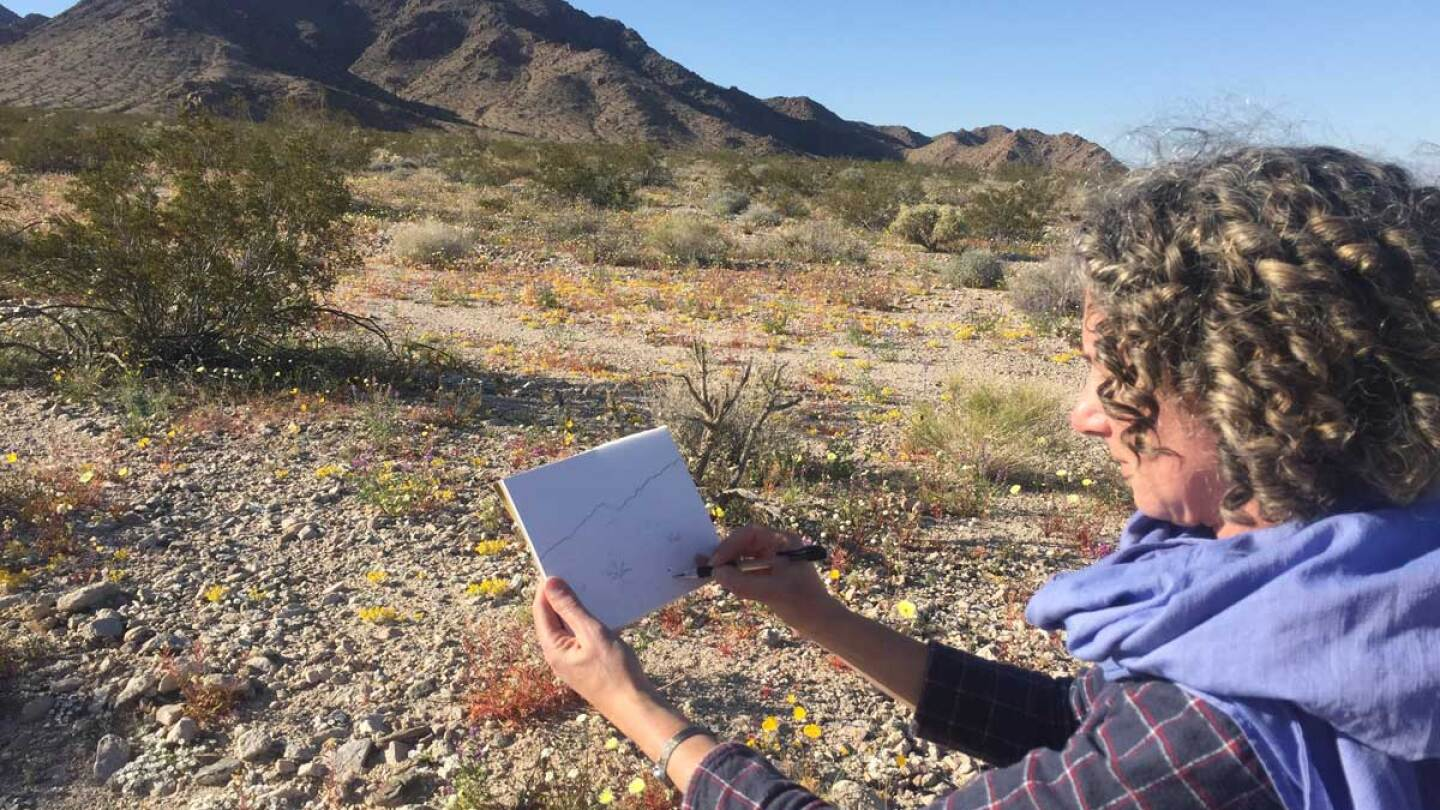 "Hillary Mushkin at the Cleghorn Wilderness site for ""Three Border Ecologies"" 