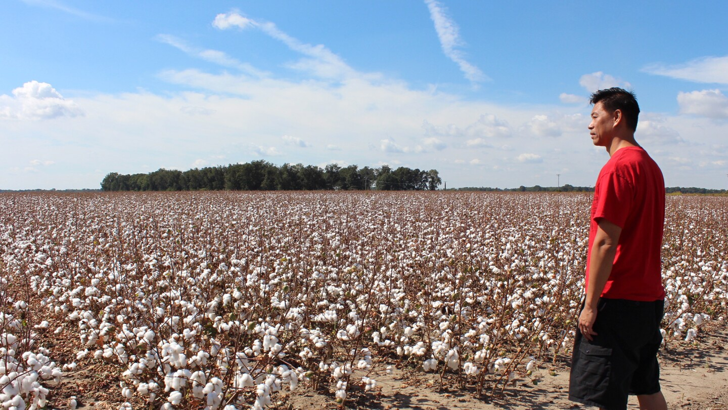 Baldwin Chiu surveys the cotton fields in Mississippi.