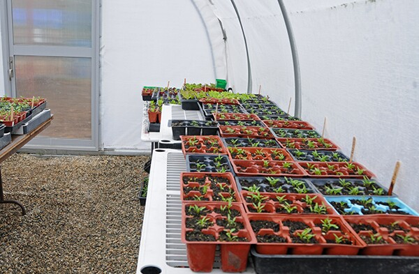 The more delicate plants are first grown in the green house before they are put in the ground.