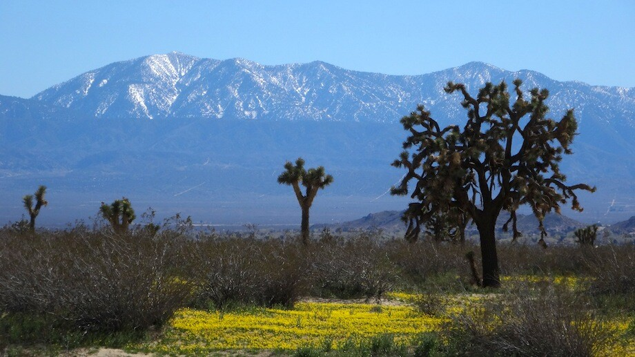 The snow-dusted San Gabriel Mountains to the south of the park. | Photo: Zach Behrens/KCET