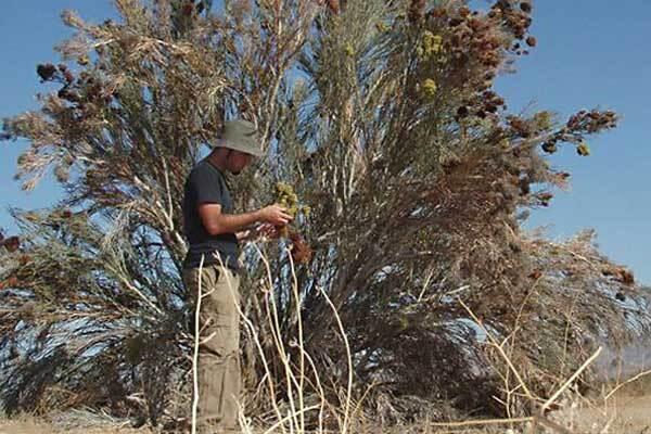 rare-plants-found-on-solar-site-thumb-600x400-65912