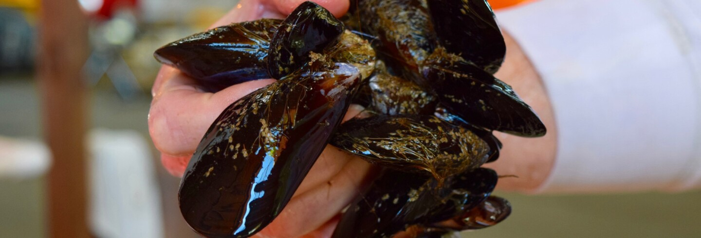 Mussels from Catalina Sea Ranch