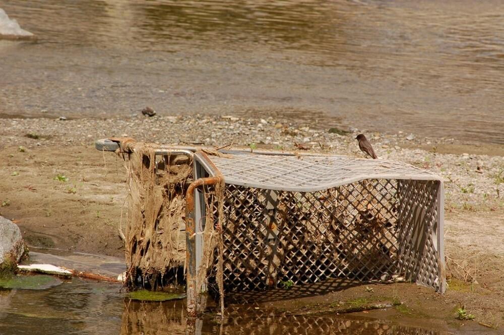 LA River Birds