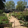 LA Urban Garden