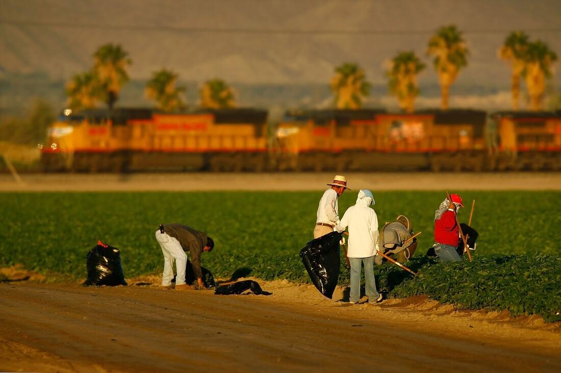Farmworkers in Coachella Valley near Mecca
