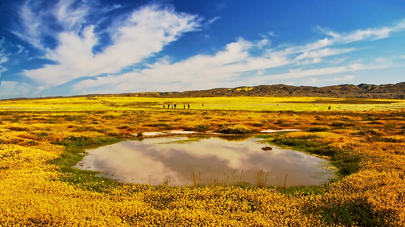 A vernal pool during wildflower season in Carrizo Plain NM | Photo: Mikaku, some rights reserved