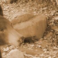 bear-crop-8-15-16.jpg