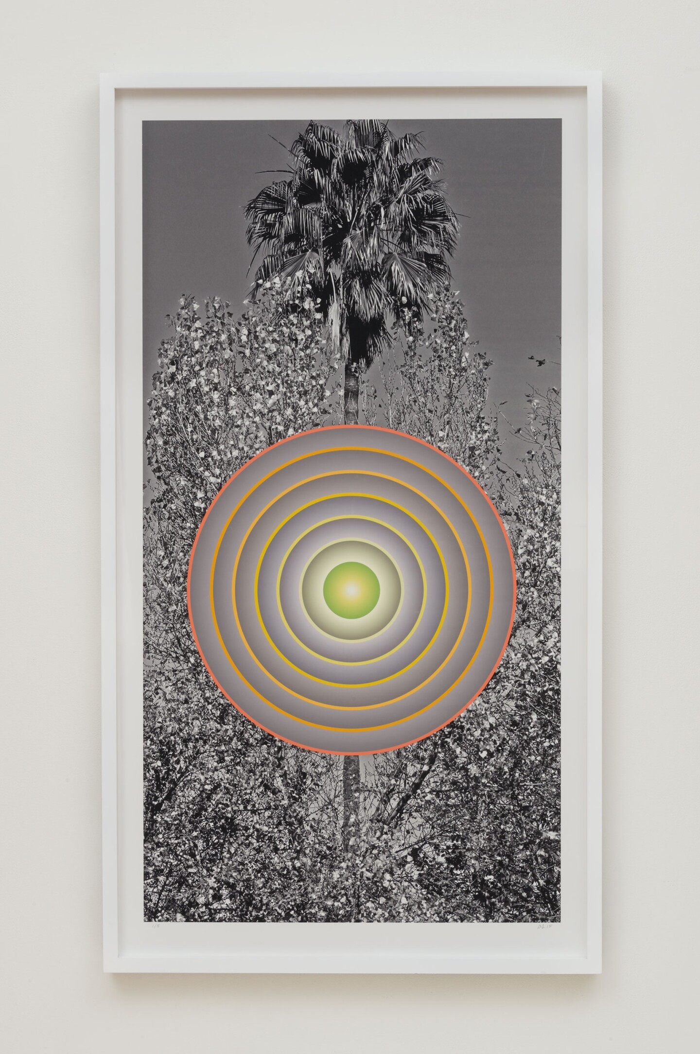 "Don Suggs, ""Autumn Palm"""