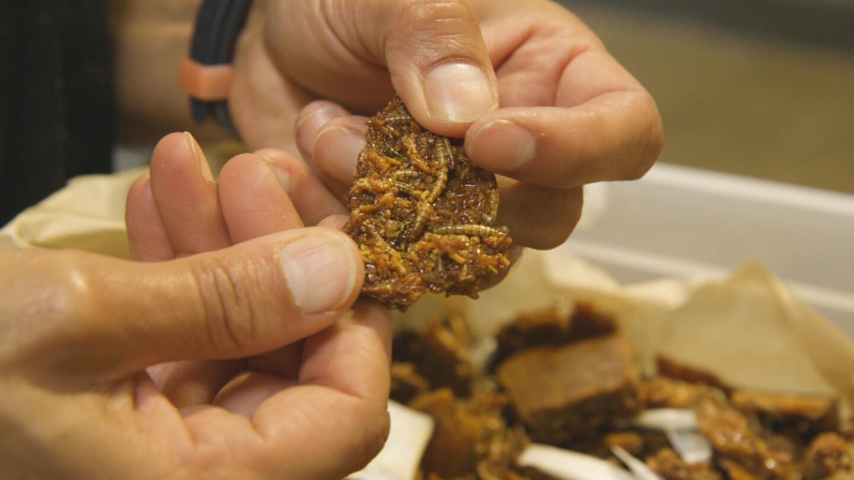 Don Bugito's Coconut Brittle Bugitos | Yubo Wang