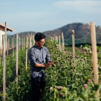 Aaron Choi, owner of Girl and Dug Farm, tends to a crop in a large field.