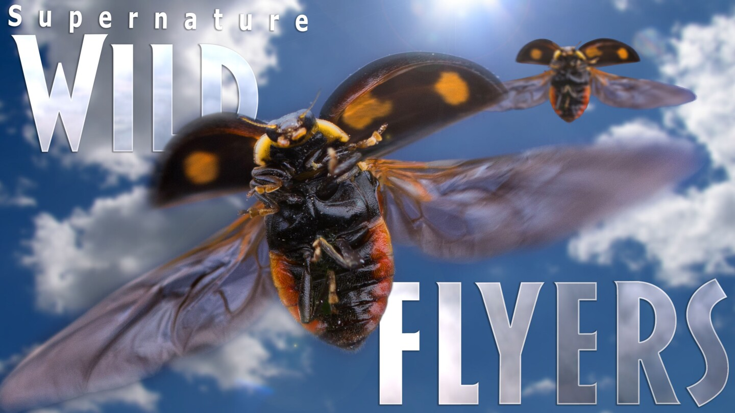 supernature wild flyers