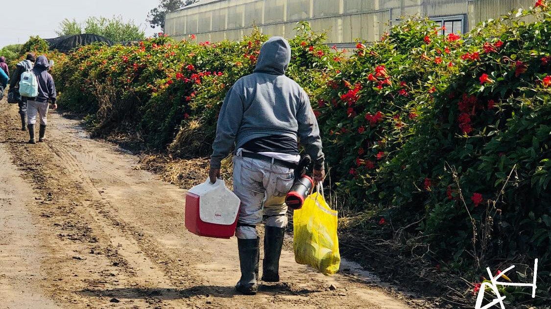 A farmworker ending the day   Amadeo Sumano