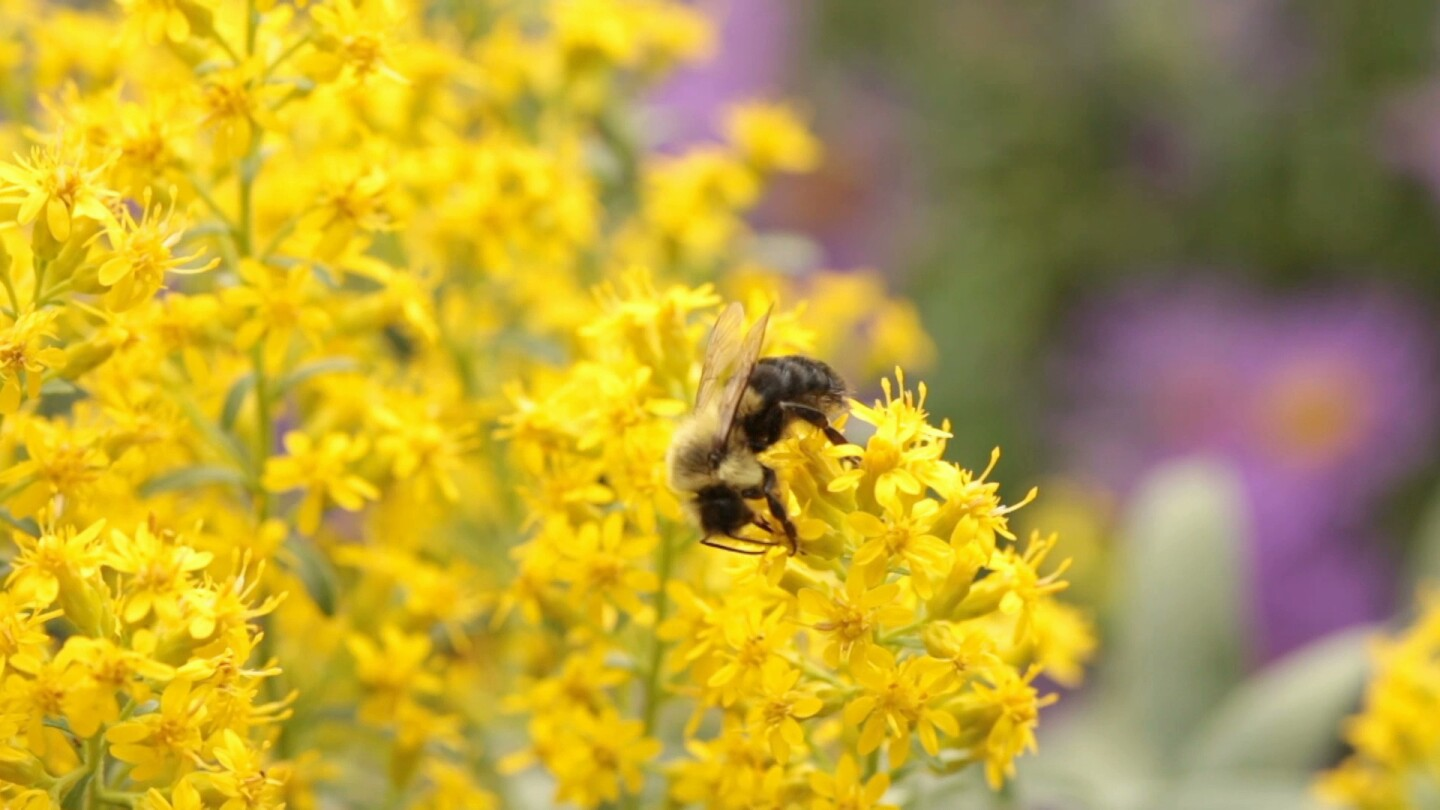 Bee and flowers