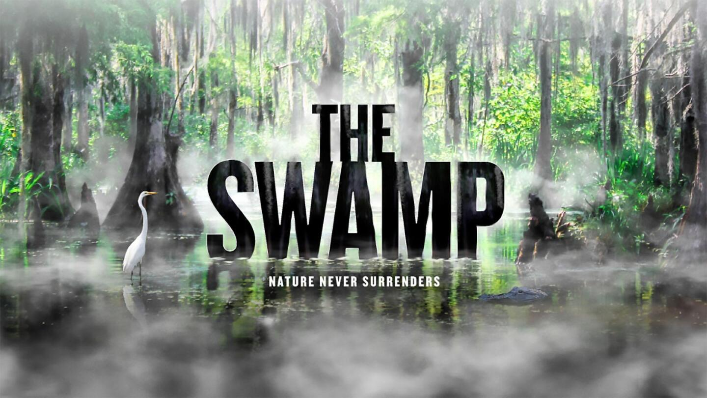 """Promo image for """"The Swamp: American Experience."""""""