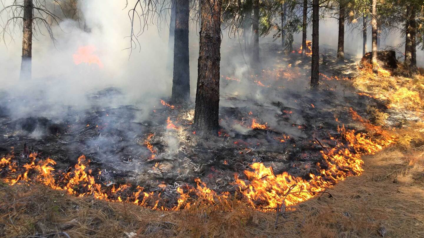 Prescribed burn in the Shasta-Trinity Forest. |  Pacific Southwest Forest Service, USDA / Flickr / CC BY 2.0