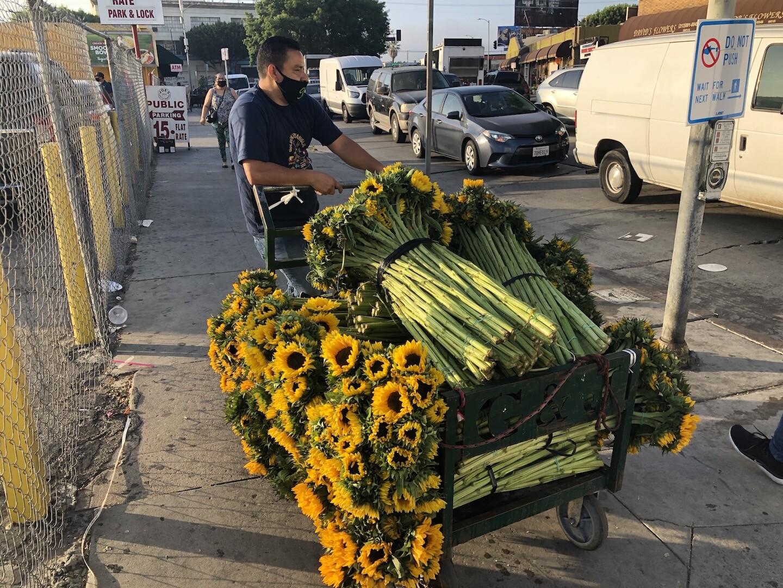 Sunflowers for sale on street corner, in time for Mother's Day | Karen Foshay