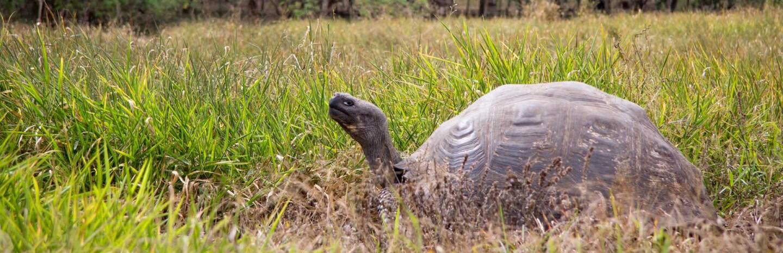 tortoise-banner-7-15-16-.jpg