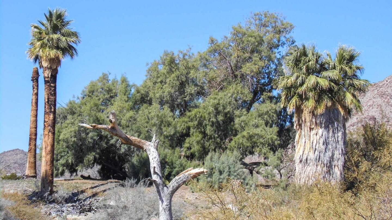 Several desert plants at Corn Springs.