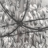 """Catherine Ruane's """"Constantine"""" barbed wire pinning back desert blossoms 
