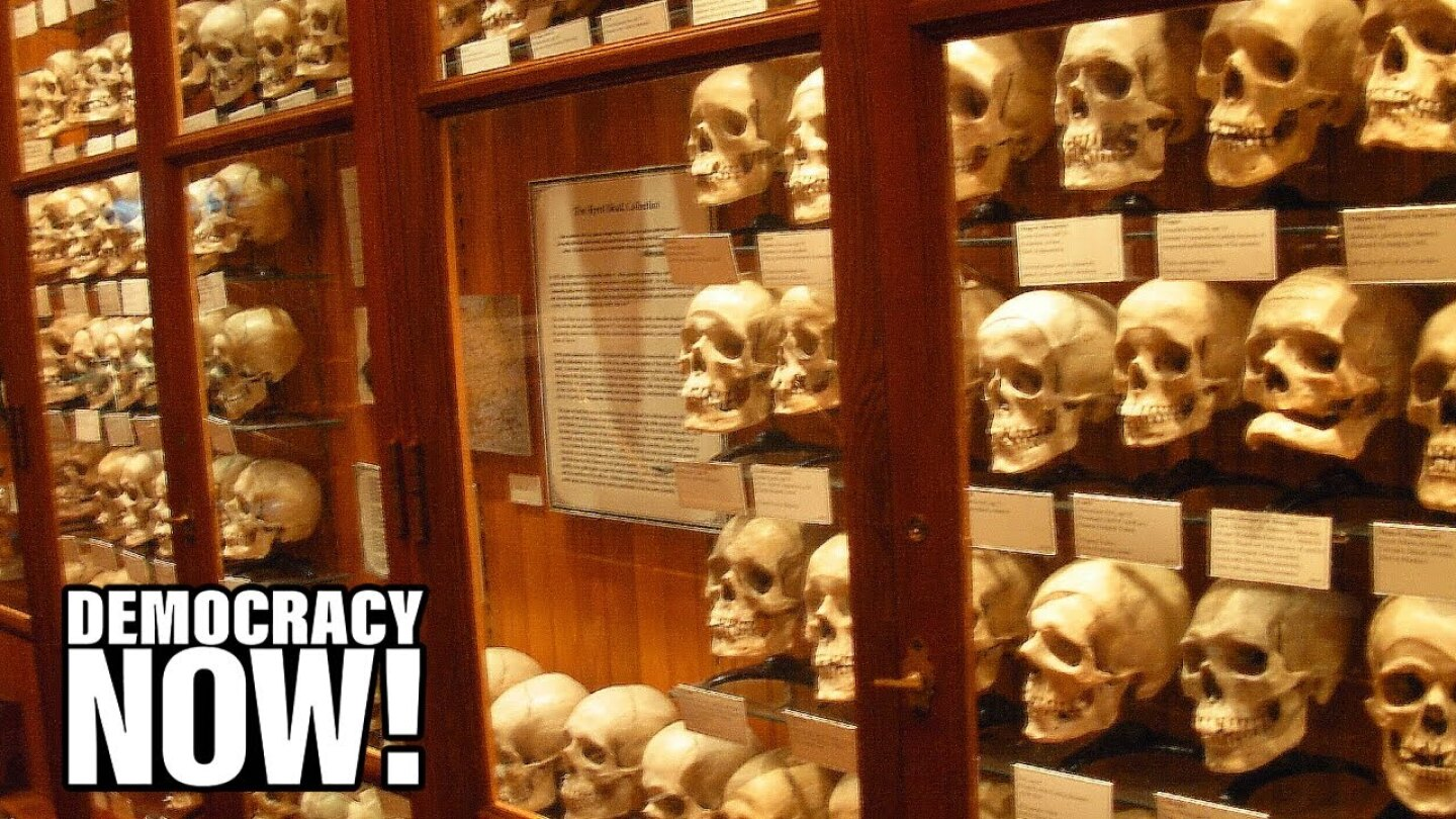 Many human skulls lined up inside a display case.