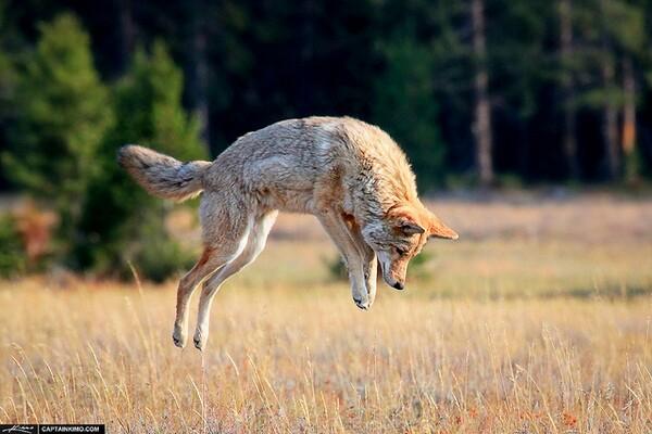 wildlife-killing-contest-ban-6-9-14-thumb-600x400-75248