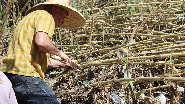 Artist Steve Appleton trims a reed   Spencer Robins