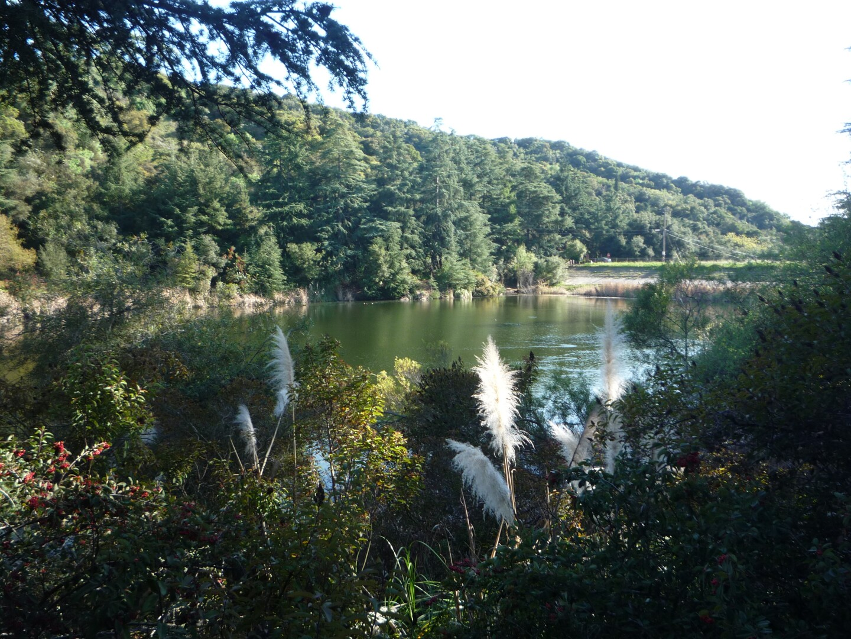 Franklin Canyon Park