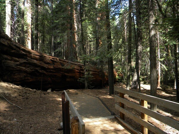 Photo Courtesy Sequoia National Forest