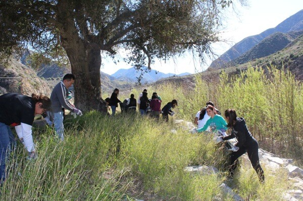 Students from John Marshall High School remove invasive Smilo grass as part of the watershed restoration project in Big Tjunga Canyon.   Photo: Courtesy Edward Belden