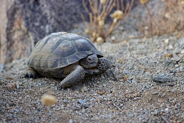 tortoise-4-1-14-thumb-600x400-71371