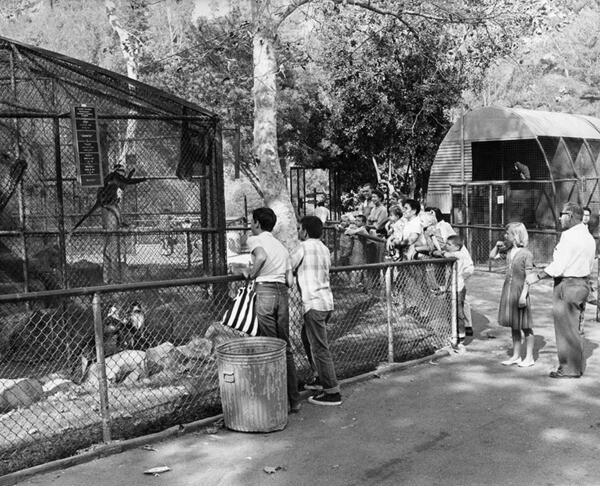 Monkeys at L.A. Zoo, 1964 | Photo: Valley Times Collection, Los Angeles Public Library