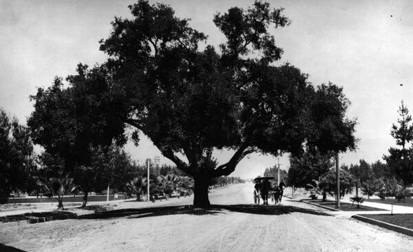 A wagon passed under a giant oak in the middle of Pasadena's Orange Grove Avenue. Courtesy of the Photo Collection, Los Angeles Public Library.