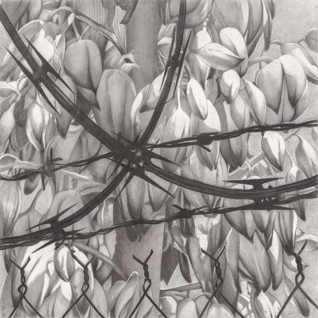 "Catherine Ruane's ""Constantine"" barbed wire pinning back desert blossoms 