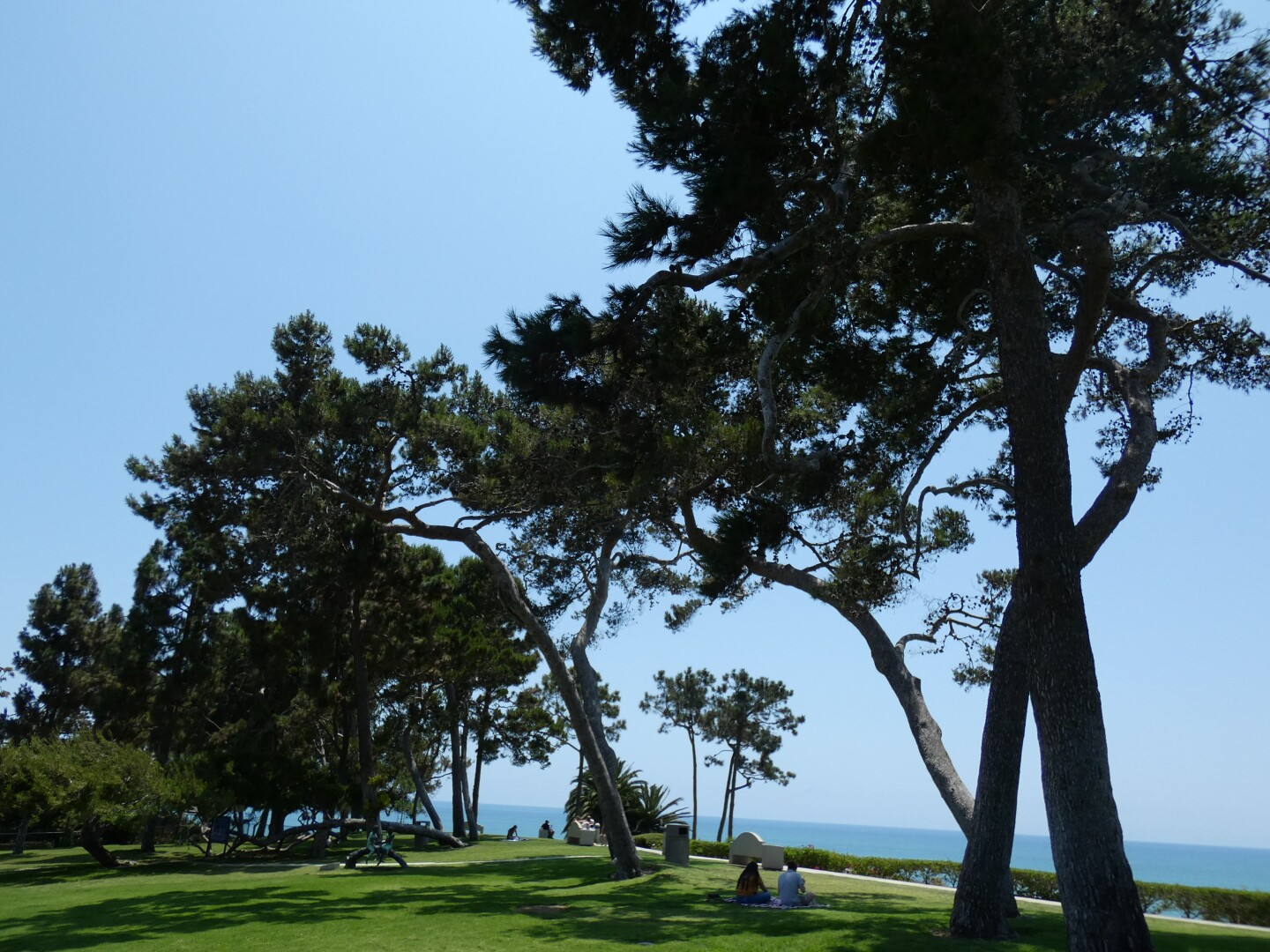 A grove of pine trees provide ample shade at a grassy park. Beyond the park is an overlook of the Pacific Ocean. Visitors rest beneath the shade of the trees.