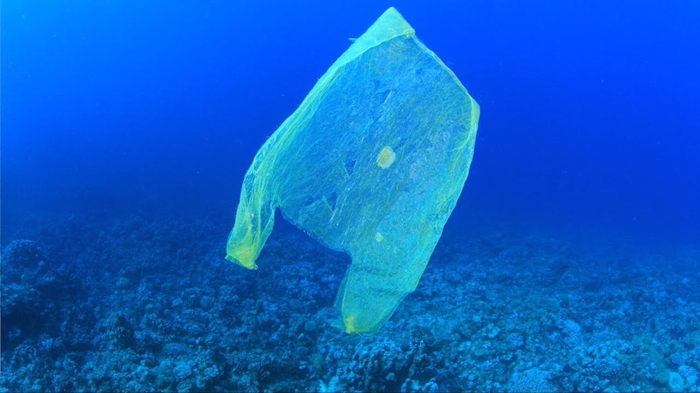 Plastic bag floating in the ocean. | Democracy Now