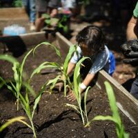 #GoodFoodLACounty Summer Lunch Program   Linus Shentu