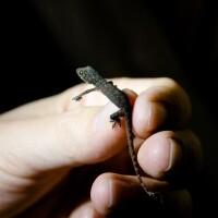 lizard-3-18-16.jpg