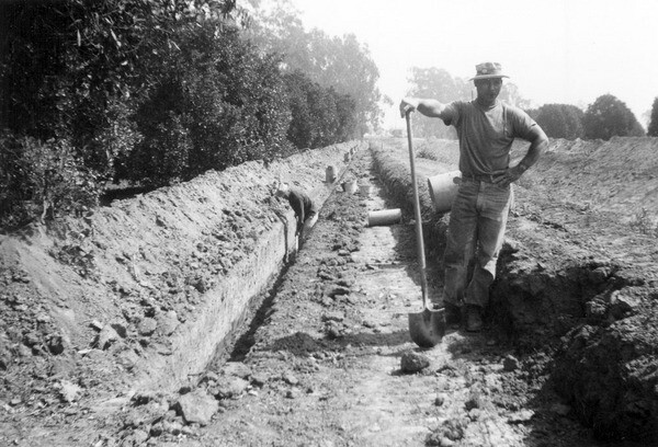 A ditch digger on the Rumbolt orange grove in Orange County, 1955. Photo courtesy of the Orange County Archives.