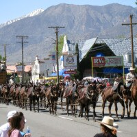 A group of mules lined up and reined together gallop down a commercial street. Spectators watch on the sides of the road and a mountain landscape fills the background.