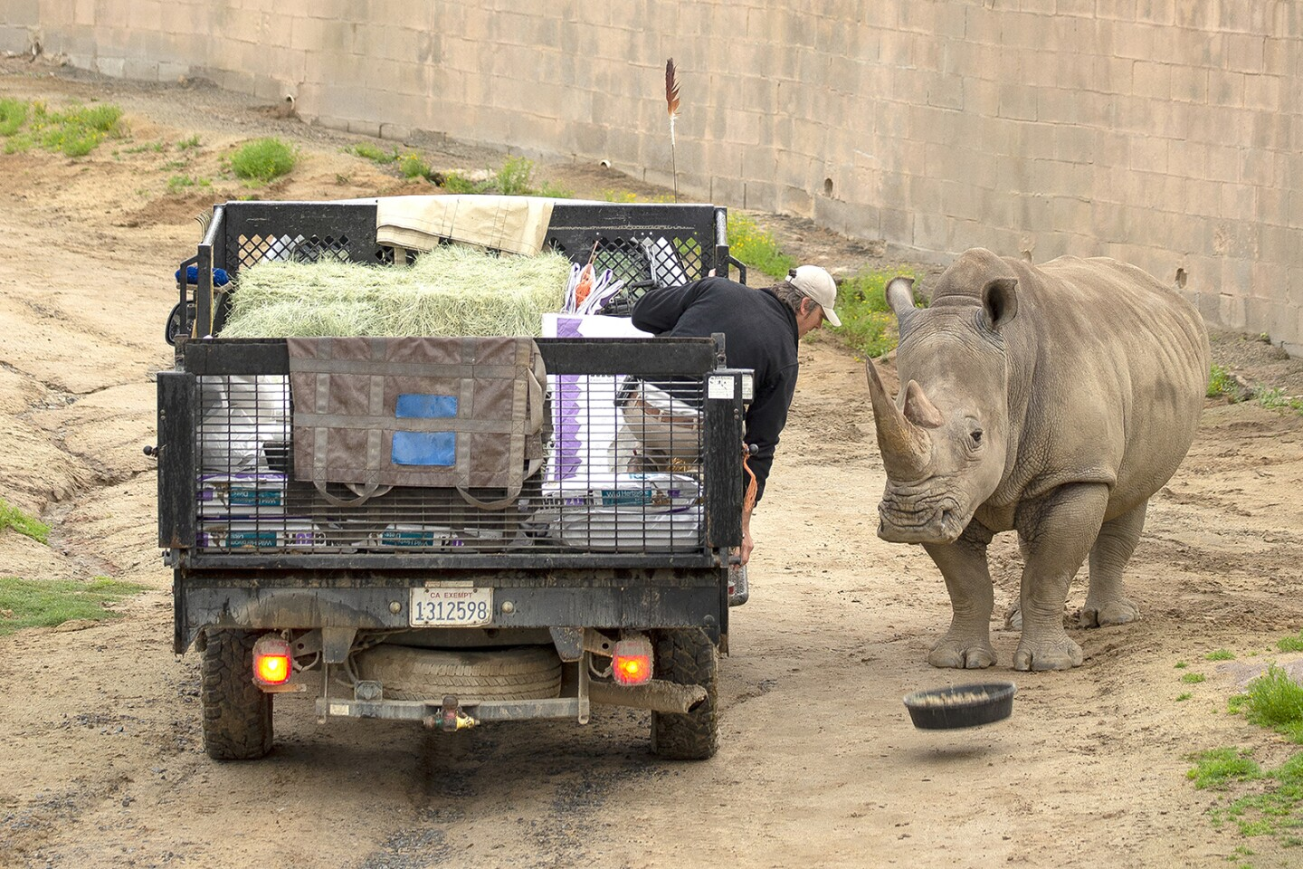 A rhino gets a meal hand delivered. | Taken on March 25, 2020 by Tammy Spratt/San Diego Zoo