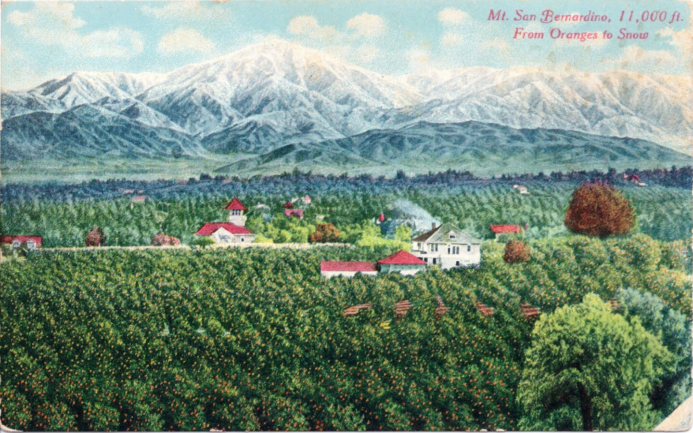 Mt. San Bernardino, 11,000 ft. – From Oranges to Snow
