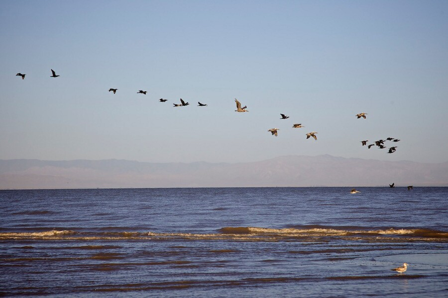 """Birds off Red Hill Marina."" Salton Sea, CA. 2014. 