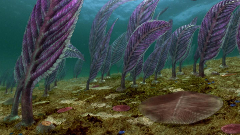 """Simulated image of large leaf-like entities on a seafloor.   """"NOVA: Australia's First 4 Billion Years - Life Explodes"""""""