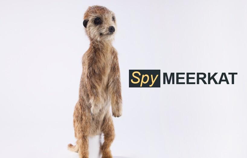 Spy Meerkat