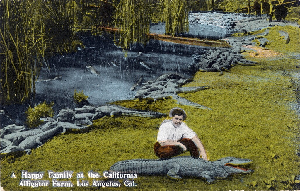 alligator_farm_lmu.jpg