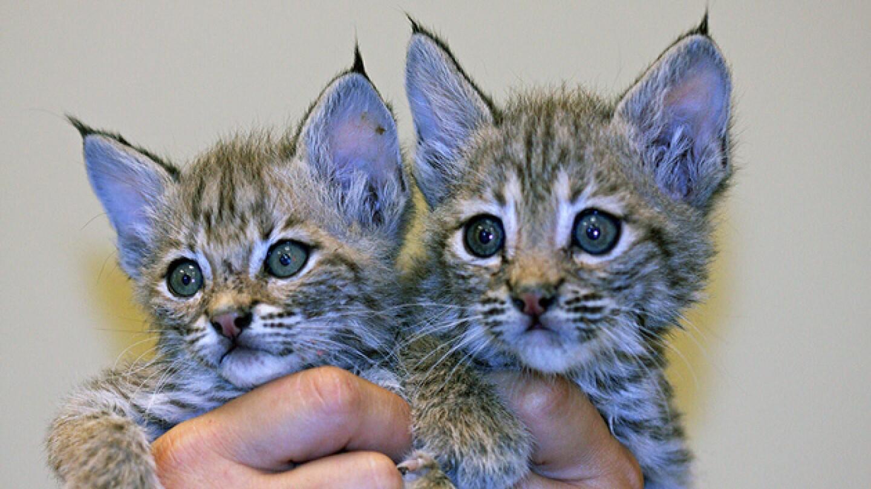 kittens2-thumb-630x420-99408